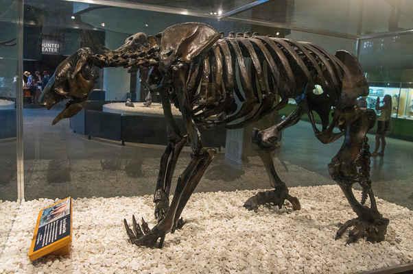 Nejstarší uhlíkové kosti dinosaurů