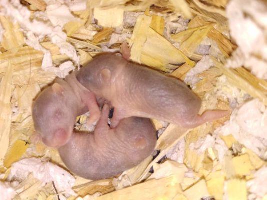 4. den 3 mláďata