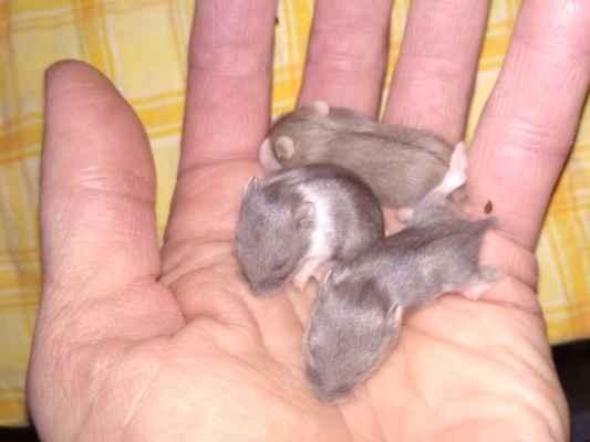 9. den 3 mláďata