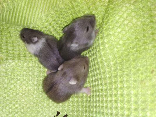 12. den 3 mláďata