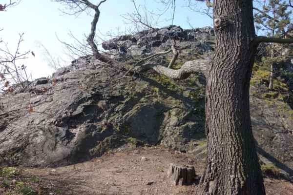 Cestou je se musí zdolávat i drobné skalky. Ještě že tady tak šikovně roste ten strom.