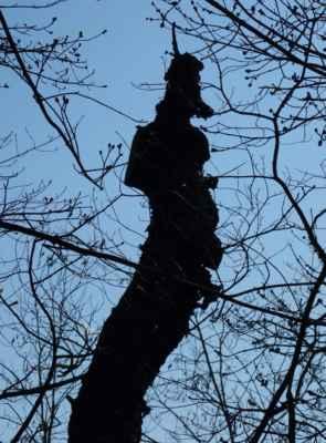 A nakonec jedno zajímavé stromové ve hvězdě.
