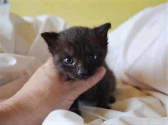 5.6.2020 - Dnes další koťata nalezena na polní cestě v Lanžhotě! Jsou to opět dvě černé kočičky - Selma a Petty. Koťata mají 5 týdnů a ještě by měla být u kočíčí mámy. Toto je důsledek nezodpovědnosti majitelů, kteří nekastrují své kočky a pak se jich zbavují takovým způsobem.