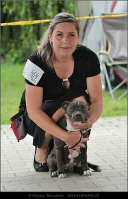 Blue Sunny Mineva From Silesian (Aston Newlaw Bohemia Superb X Bambia Bondystaff Kennel) - Psi - třída štěňat - VN2