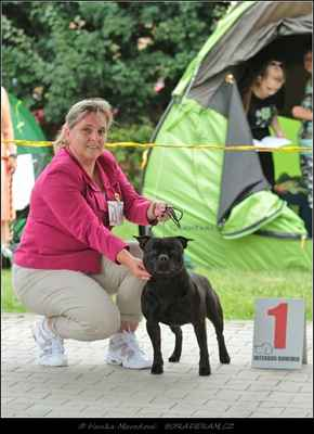 Glimmer Man Domidar Dogs (Breno Domidar Dogs X Maya Stawka Wieksza niz Źycie) - Psi - třída čestná - V1