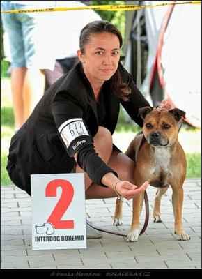 Aimee Habiba Staff (Glory of Hunter Warriorbull X Ellis ze Zalabské samoty) - Feny - třída pracovní - VD2
