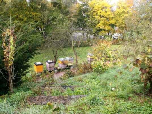 včelíny ve farské zahradě - sladké pokušení