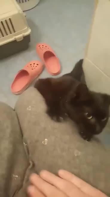 19.4.2021 - V Lanžhotě byla nalezena cca 7měsíční černá kočička, zablešená, nemocná. Dostala jméno Adélka a je v dočasné péči umístěna do karantény.