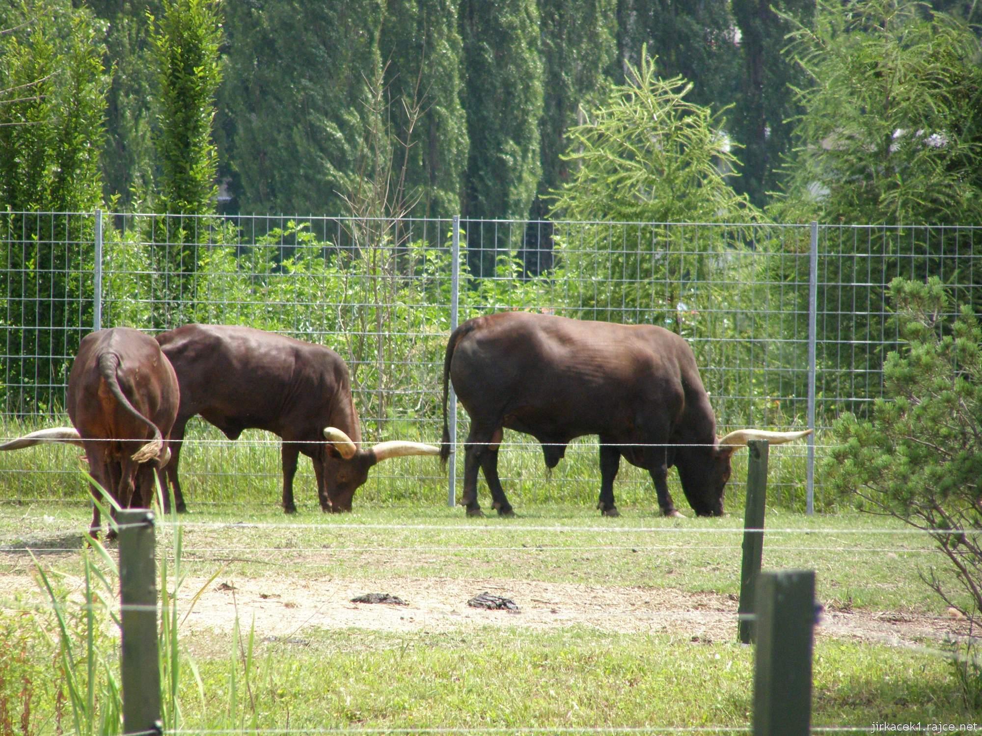 Zoopark Vyškov - Jak