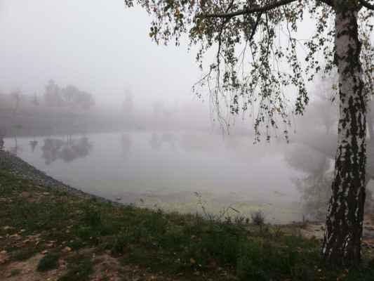 Dne 27.10.2019 cestou k cyklostezce Ždánka, rybník Čejč.